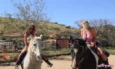 Ride Them Horses!