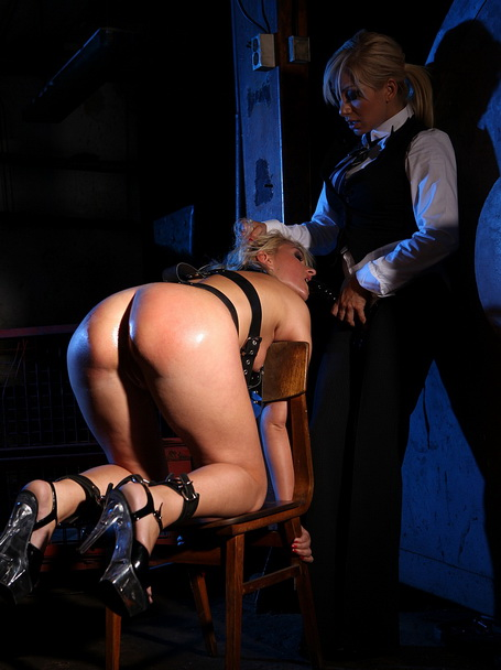 Pain is a good teacher for this new blonde pet